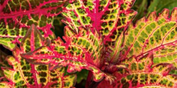 Plant Source International